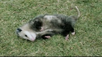 GEICO TV Spot, 'The Best of GEICO: Opossum' - Thumbnail 3