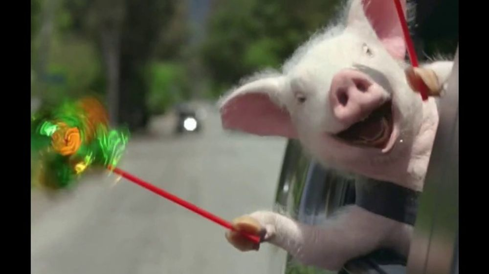 GEICO TV Commercial, 'The Best of GEICO: Maxwell the Pig ...