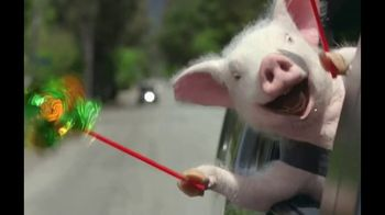GEICO TV Spot, 'The Best of GEICO: Maxwell the Pig'