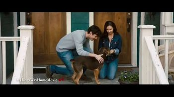 A Dog's Way Home - Alternate Trailer 14