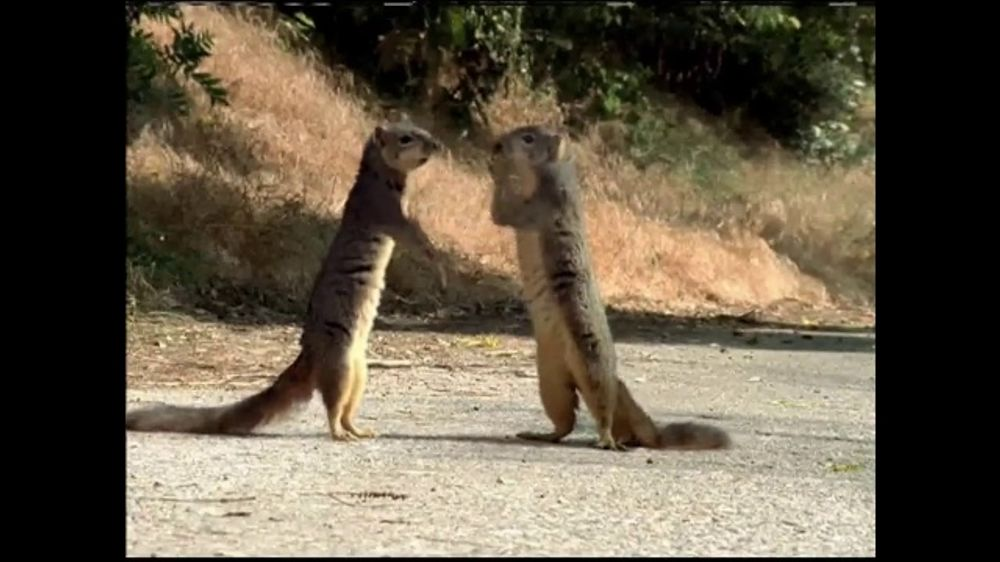 Roadside Assistance State Farm >> GEICO TV Commercial, 'The Best of GEICO: Squirrels' - iSpot.tv