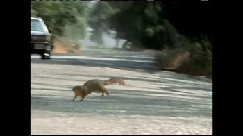 GEICO TV Spot, 'The Best of GEICO: Squirrels' - Thumbnail 5