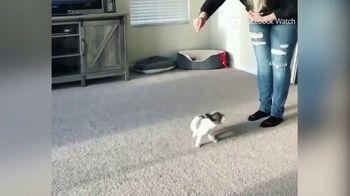 Facebook Watch TV Spot, 'World's Most Amazing Dog' - Thumbnail 3