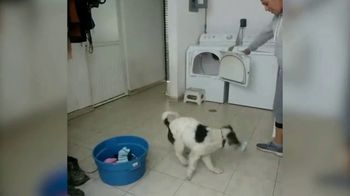 Facebook Watch TV Spot, 'World's Most Amazing Dog' - Thumbnail 5