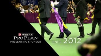 Purina Pro Plan TV Spot, 'Westminster Kennel Club Dog Show'
