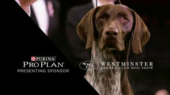 Purina Pro Plan TV Spot, 'Westminster Kennel Club Dog Show' - Thumbnail 3