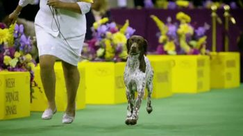 Purina Pro Plan TV Spot, 'Westminster Kennel Club Dog Show' - Thumbnail 4