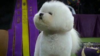 Purina Pro Plan TV Spot, 'Westminster Kennel Club Dog Show' - Thumbnail 5