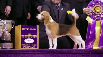 Purina Pro Plan TV Spot, 'Westminster Kennel Club Dog Show' - Thumbnail 7