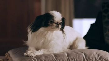 Stanton Optical TV Spot, 'The Dog' - Thumbnail 2