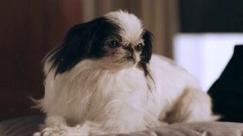 Stanton Optical TV Spot, 'The Dog' - Thumbnail 4