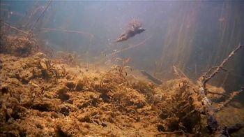 Berkley Fishing PowerBait TV Spot, 'More Fish' - Thumbnail 6