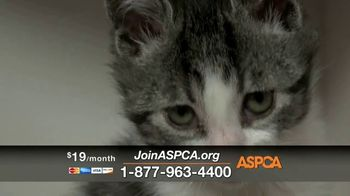 ASPCA TV Spot, 'New Donors Urgently Needed' Song by Susan Boyle - Thumbnail 9