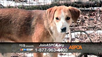 ASPCA TV Spot, 'New Donors Urgently Needed' Song by Susan Boyle - Thumbnail 4