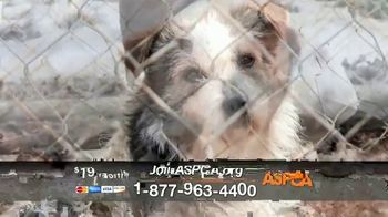 ASPCA TV Spot, 'New Donors Urgently Needed' Song by Susan Boyle - Thumbnail 6