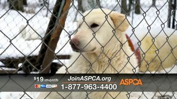 ASPCA TV Spot, 'New Donors Urgently Needed' Song by Susan Boyle - Thumbnail 7