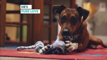 The Shelter Pet Project TV Spot, 'Renee and Turtle' - Thumbnail 10