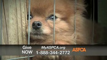 ASPCA TV Spot, 'One Last Holiday Gift' - Thumbnail 10