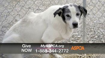 ASPCA TV Spot, 'One Last Holiday Gift' - Thumbnail 3