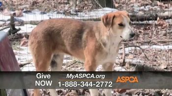 ASPCA TV Spot, 'One Last Holiday Gift' - Thumbnail 4