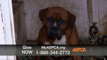 ASPCA TV Spot, 'One Last Holiday Gift' - Thumbnail 5