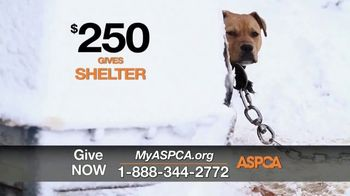 ASPCA TV Spot, 'One Last Holiday Gift' - Thumbnail 6