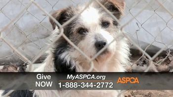 ASPCA TV Spot, 'One Last Holiday Gift' - Thumbnail 7