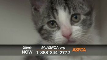 ASPCA TV Spot, 'One Last Holiday Gift' - Thumbnail 9