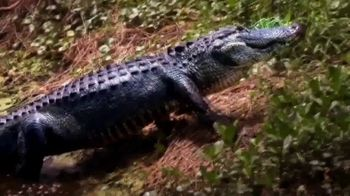 Discover the Palm Beaches TV Spot, 'The Everglades' - Thumbnail 5