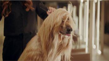 E*TRADE Prebuilt Mutual Fund Portfolios TV Spot, 'Doggie Spa Day' - Thumbnail 10