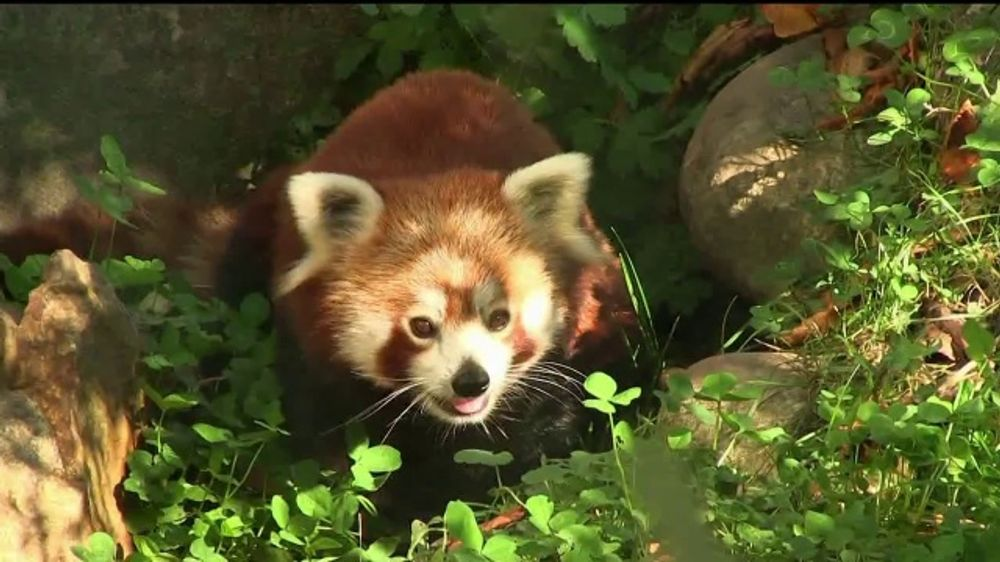 Smithsonian National Zoo TV Commercial, '2019 Bite Night' - Video