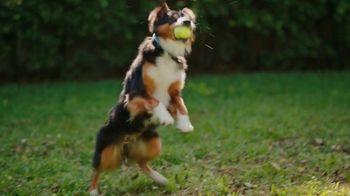 Jackson Hewitt TV Spot, 'Dog Wall of More' - Thumbnail 3