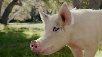 Carl's Jr. Bacon Truffle Angus Burger TV Spot, 'Pig'