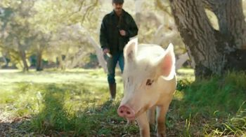 Carl's Jr. Bacon Truffle Angus Burger TV Spot, 'Pig' - Thumbnail 5
