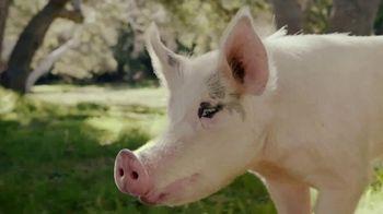 Carl's Jr. Bacon Truffle Angus Burger TV Spot, 'Pig'