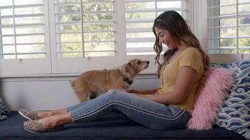 Pets are Like Family thumbnail