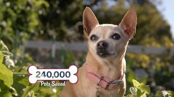 Bobs from SKECHERS TV Spot, 'Pets are Like Family' - Thumbnail 6