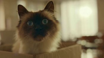 Iams TV Spot, \'Who I Am: Izzy\'