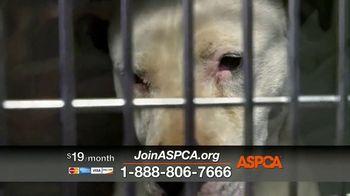 ASPCA TV Spot, 'Would You?' - Thumbnail 8