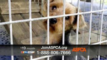 ASPCA TV Spot, 'Would You?' - Thumbnail 3