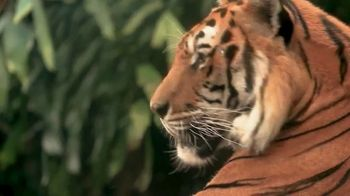 Perfect Diary Beauty TV Spot, 'Discovery Channel: Tiger' - Thumbnail 4