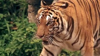Perfect Diary Beauty TV Spot, 'Discovery Channel: Tiger' - Thumbnail 6