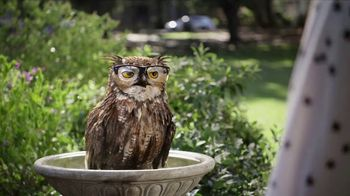 America's Best Contacts and Eyeglasses Designer Sale TV Spot, 'Bird Bath' - 877 commercial airings