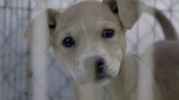 ASPCA Prevention of Cruelty to Animals Month  TV Spot, 'Every Year' - Thumbnail 2
