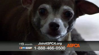 ASPCA Prevention of Cruelty to Animals Month  TV Spot, 'Every Year' - Thumbnail 5