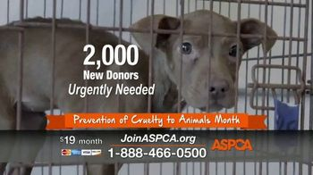 ASPCA Prevention of Cruelty to Animals Month  TV Spot, 'Every Year' - Thumbnail 6