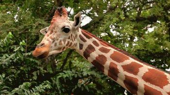 Metro by T-Mobile TV Spot, 'Basketball Giraffes' Song by Usher - Thumbnail 1