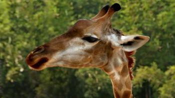Metro by T-Mobile TV Spot, 'Basketball Giraffes' Song by Usher - Thumbnail 4