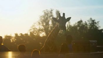 Busch Gardens Tampa Bay TV Spot, 'Experience Wild Life and Wild Rides: BOGO' - Thumbnail 4