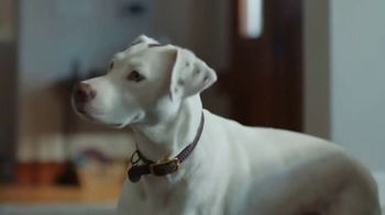American Express TV Spot, 'Membership: Squirrel' - Thumbnail 4